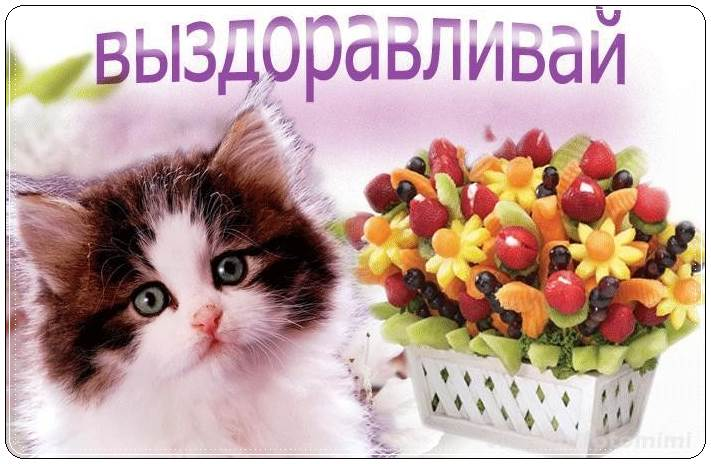котенком-2
