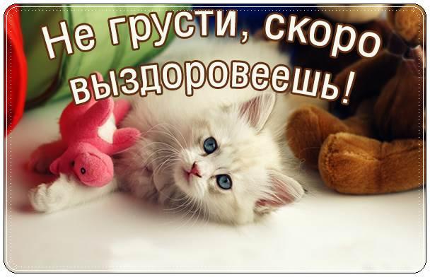 котенком