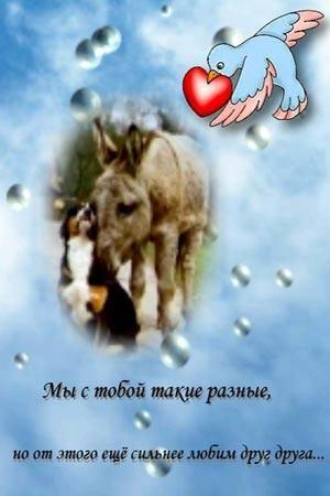 люблю 19