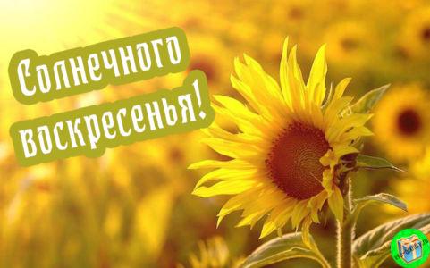 Открытка солнечного воскресенья